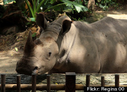 Virginia Could Ban Rhinos As Pets