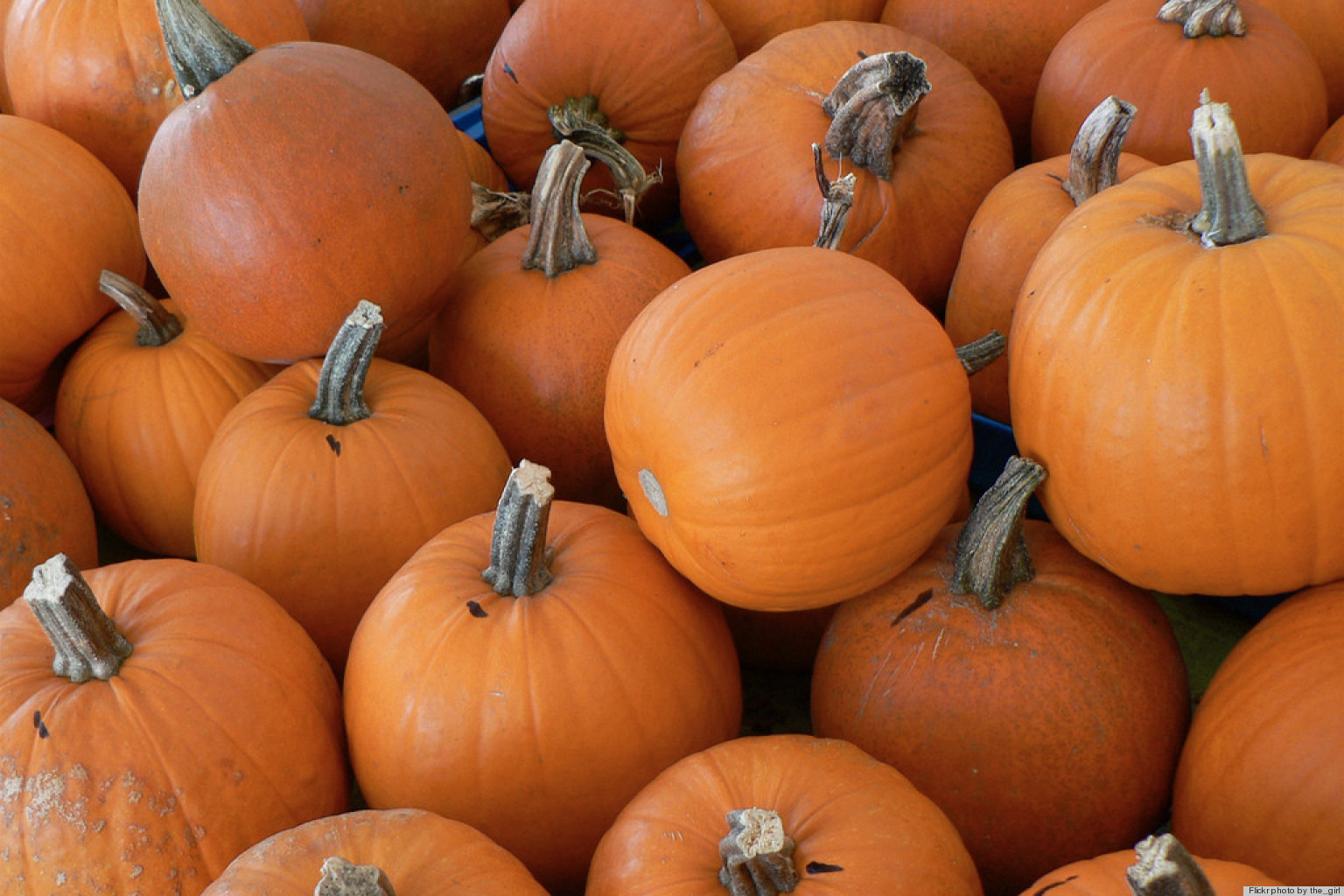 Repurposing Ideas 5 New Uses For Pumpkins Huffpost
