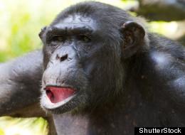 Las Vegas Activists Protest Backyard Chimp Permit