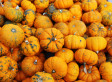 It's a Pumpkin Party: Healthy Pumpkin Recipes and Products