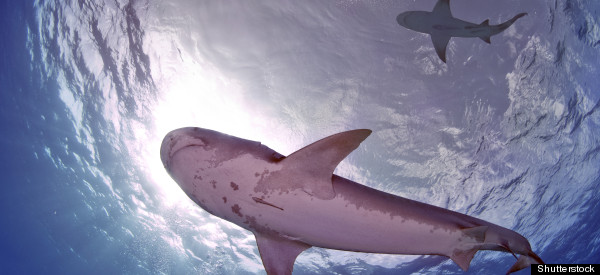 Less Blood in the Water: Researchers Try New Way to Keep Sharks From Beachgoers