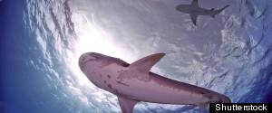 SHARKS COCOS ISLAND