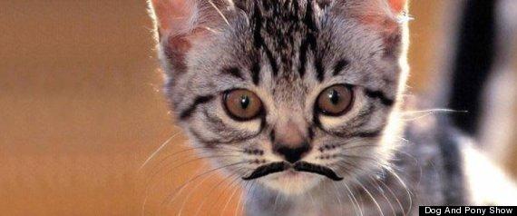 MOVEMBER CAT