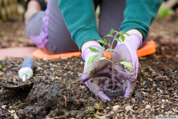 seasonal affective disorder gardening