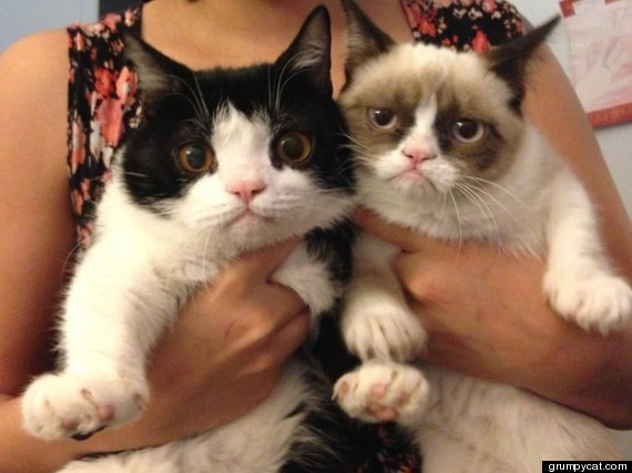 Grumpy Cat's Brother Revealed: Pokey Is An Only Slightly Less Grumpy ...