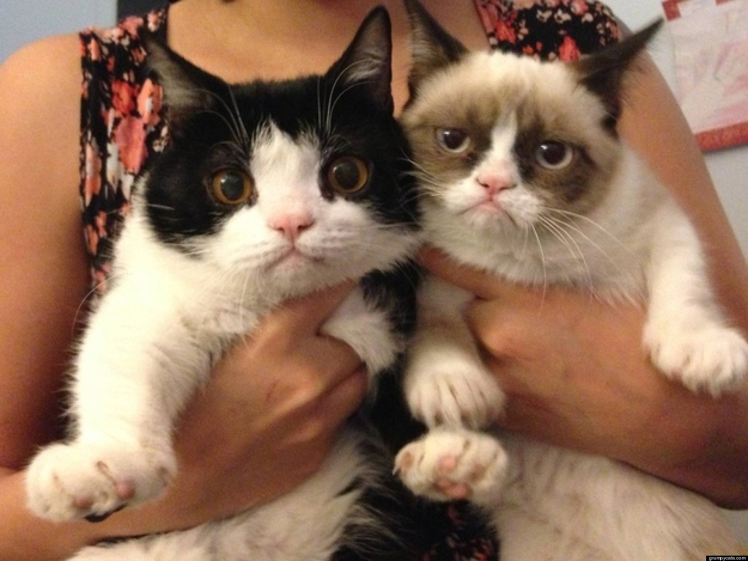 grumpy cats brother revealed pokey is an only slightly