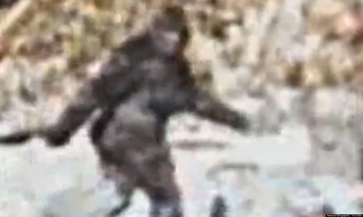 bigfoot real or not Find out why bigfoot is a big, fat fake and some say he doesn't exist is bigfoot real or not the sasquatch myth debunked.