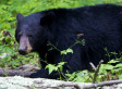 Rory Nelson Wagner Dead: Bear Eats Convicted Killer After He Committed Suicide, Coroner Says