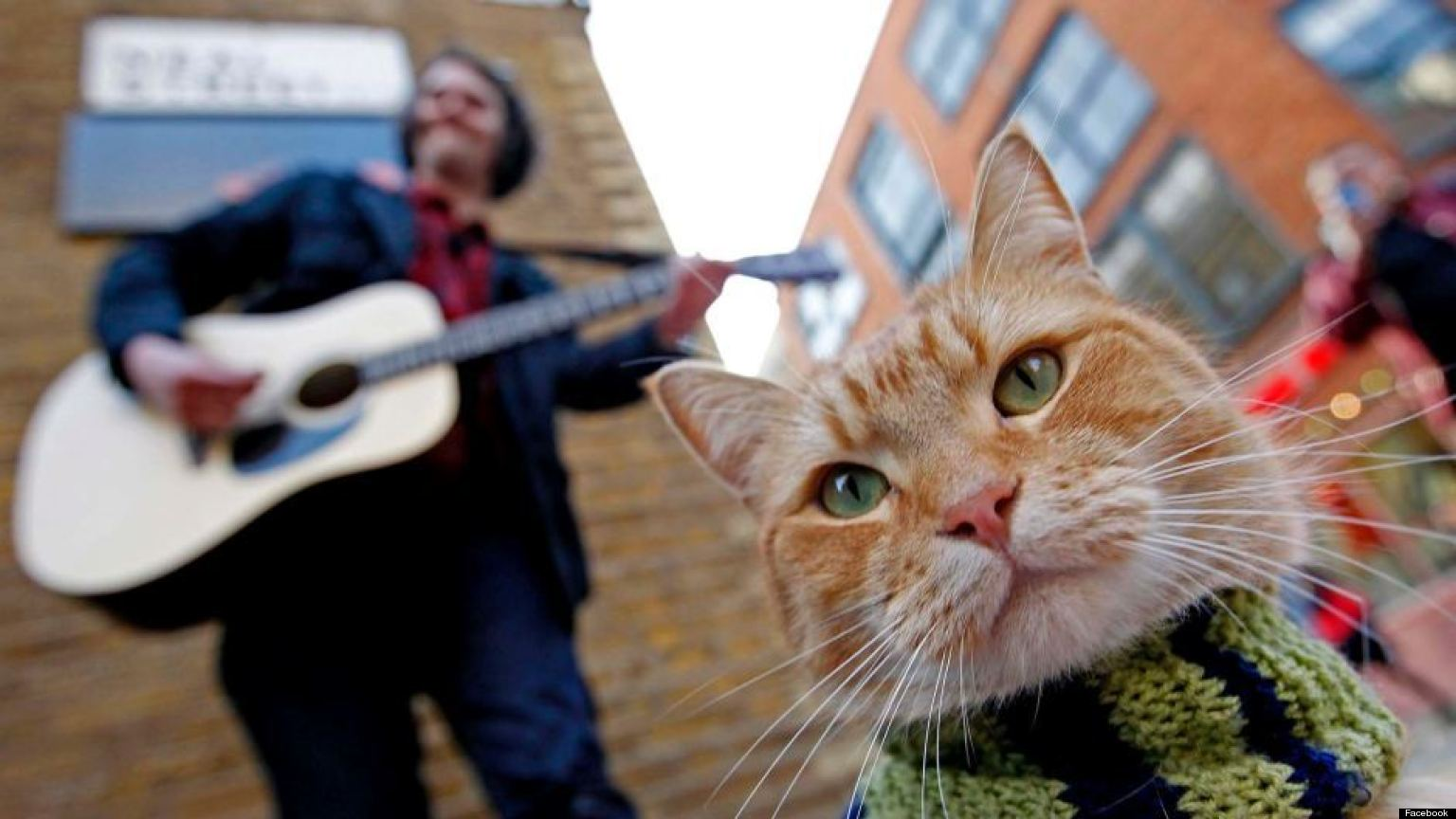 Images Of A Street Cat Named Bob