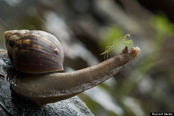 bm_snail_01292349