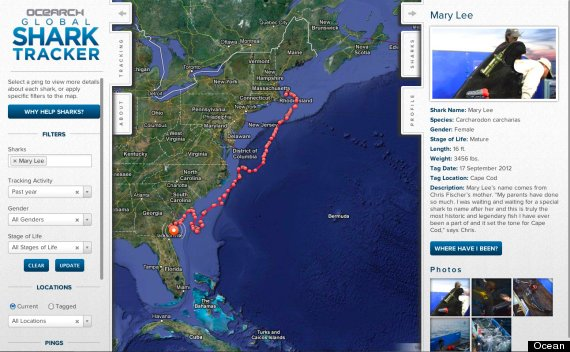 mary lee shark tracker