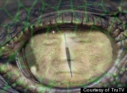 Is The Reptilian Conspiracy Theory Real?