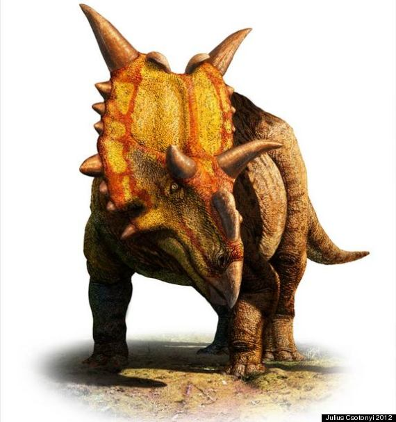 xenoceratops horned dinosaur