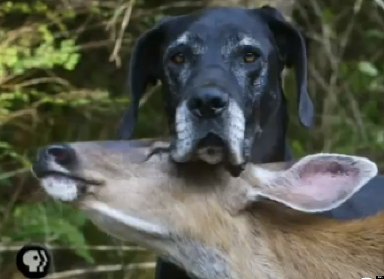 Pbs Dog And Deer Video