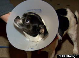 Northwest Side Dog Attacks Have Residents On Edge