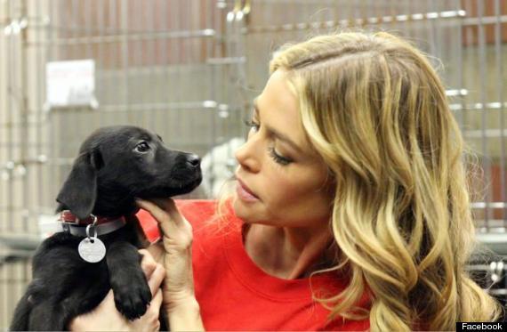 denise richards adopts puppy