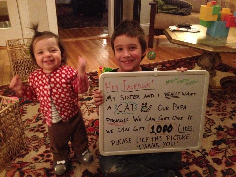cat bet facebook