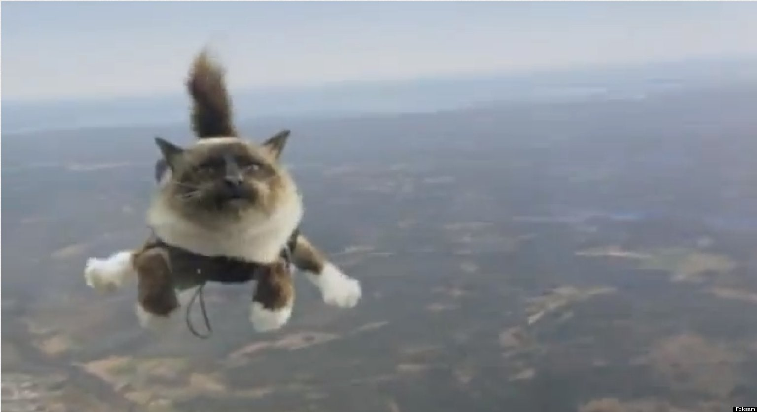 Skydiving Cats Swedish Pet Insurance Ad Is Majestic Terrifying Video Huffpost