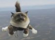 Skydiving Cats: Swedish Pet Insurance Ad Is Majestic, Terrifying (VIDEO)