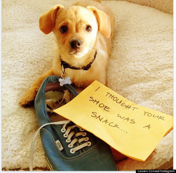 lauren conrad dog