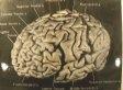 Albert Einstein's Brain: 12 Facts About Gray Matter Of Scientific Genius (PHOTOS)