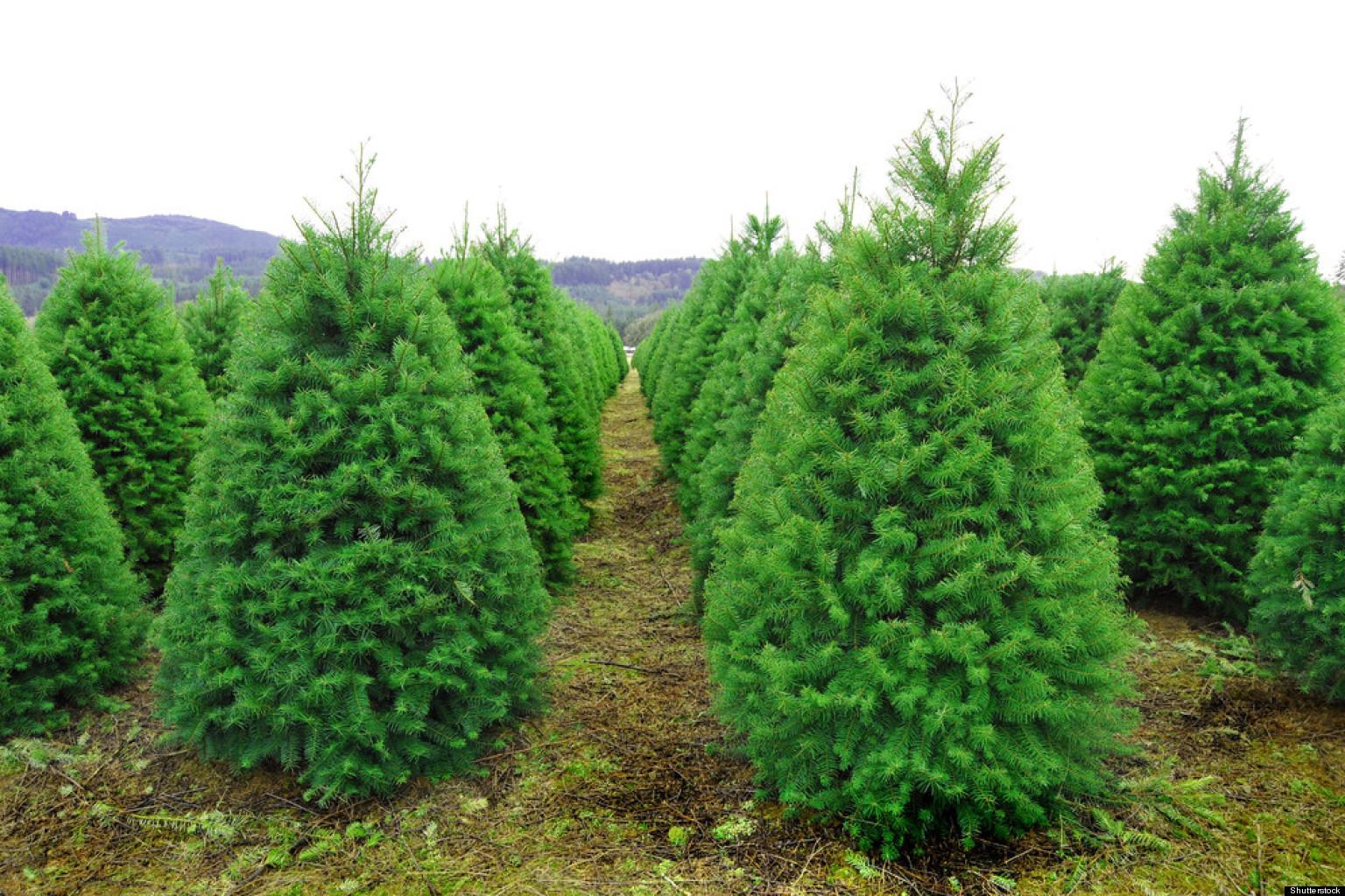 Green Christmas: How To Make Your Christmas Tree More Eco