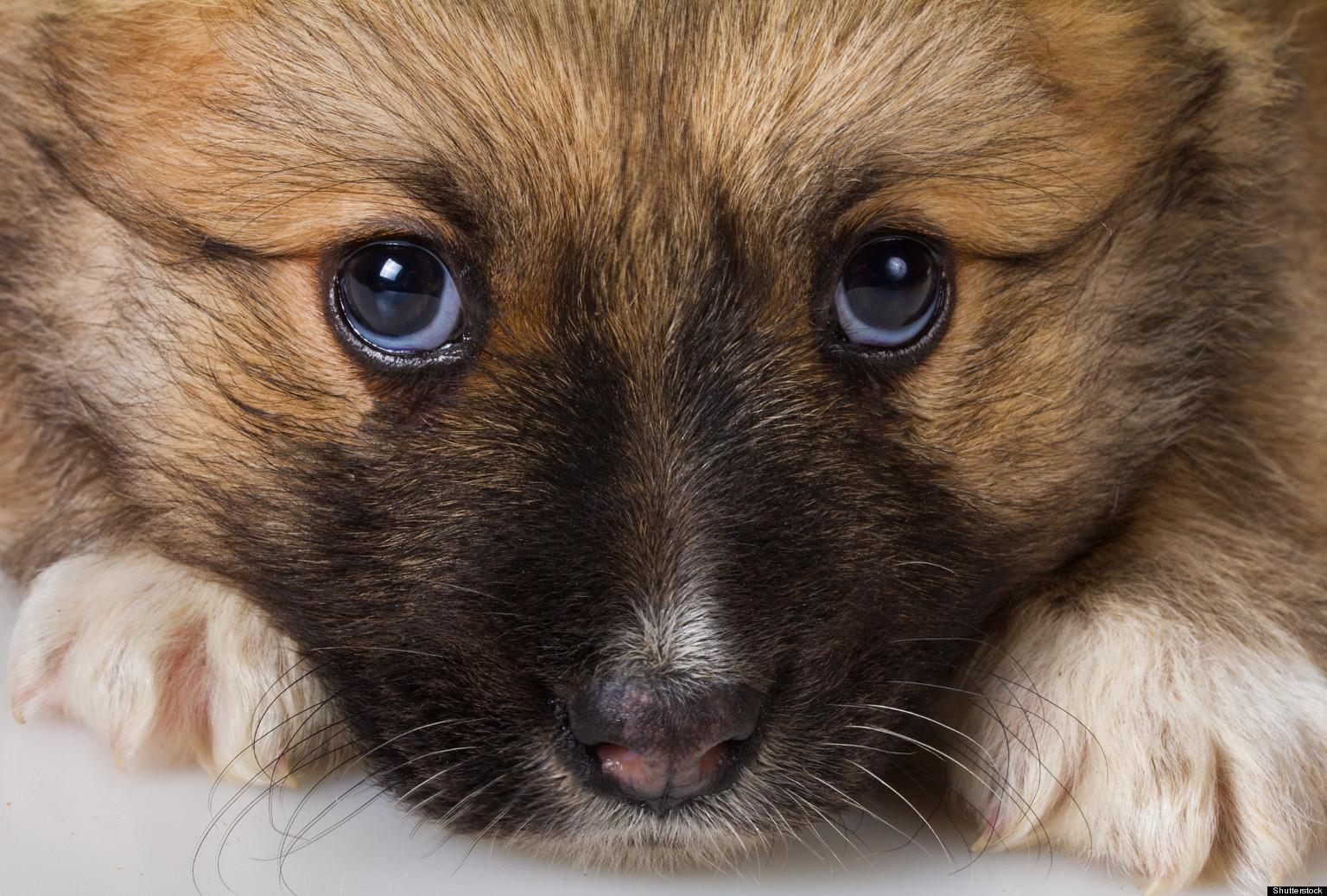 The Scoop on Your Pet's Poop | HuffPost