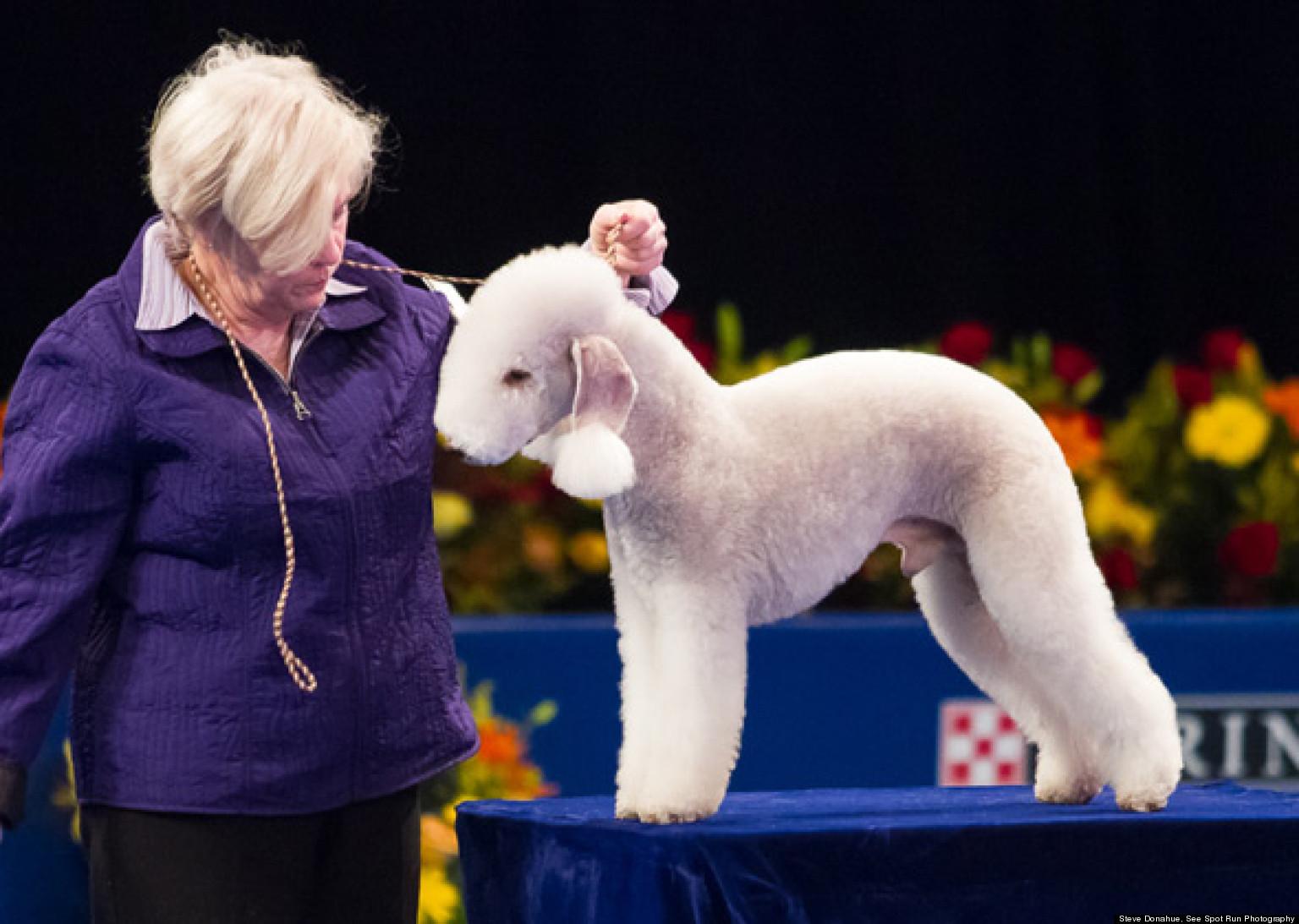 Strange Dog Breeds Spotted At The 2012 National Dog Show
