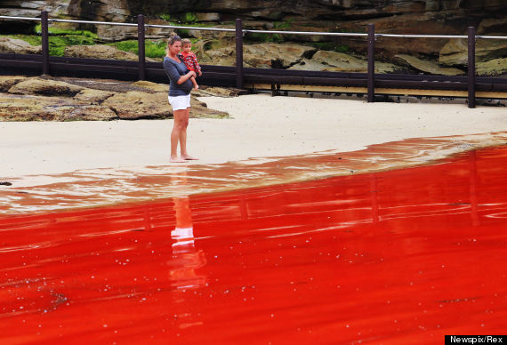 bondi beach turns red