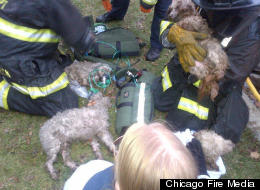 Man Dogs Rescued From Fire Chicago