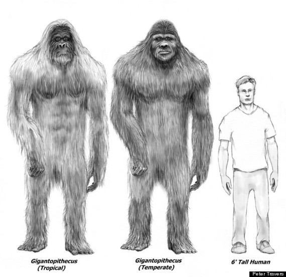 Bigfoot dna tests prove hairy creature exists genetic researcher bigfoot peter travers sciox Images