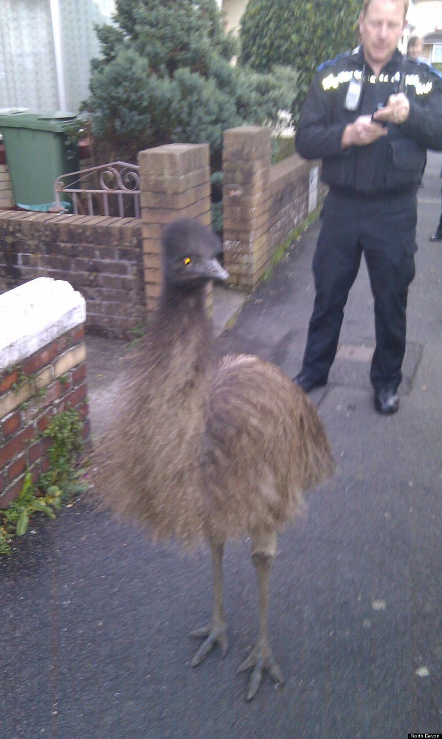 north devon emu