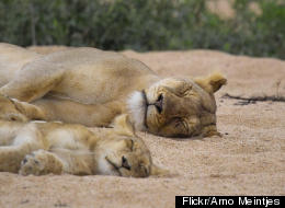 PHOTOS: 30 Animal Parents With Their Babies Will Make Your Day Better