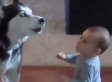 Dog Communicates With Baby (VIDEO)