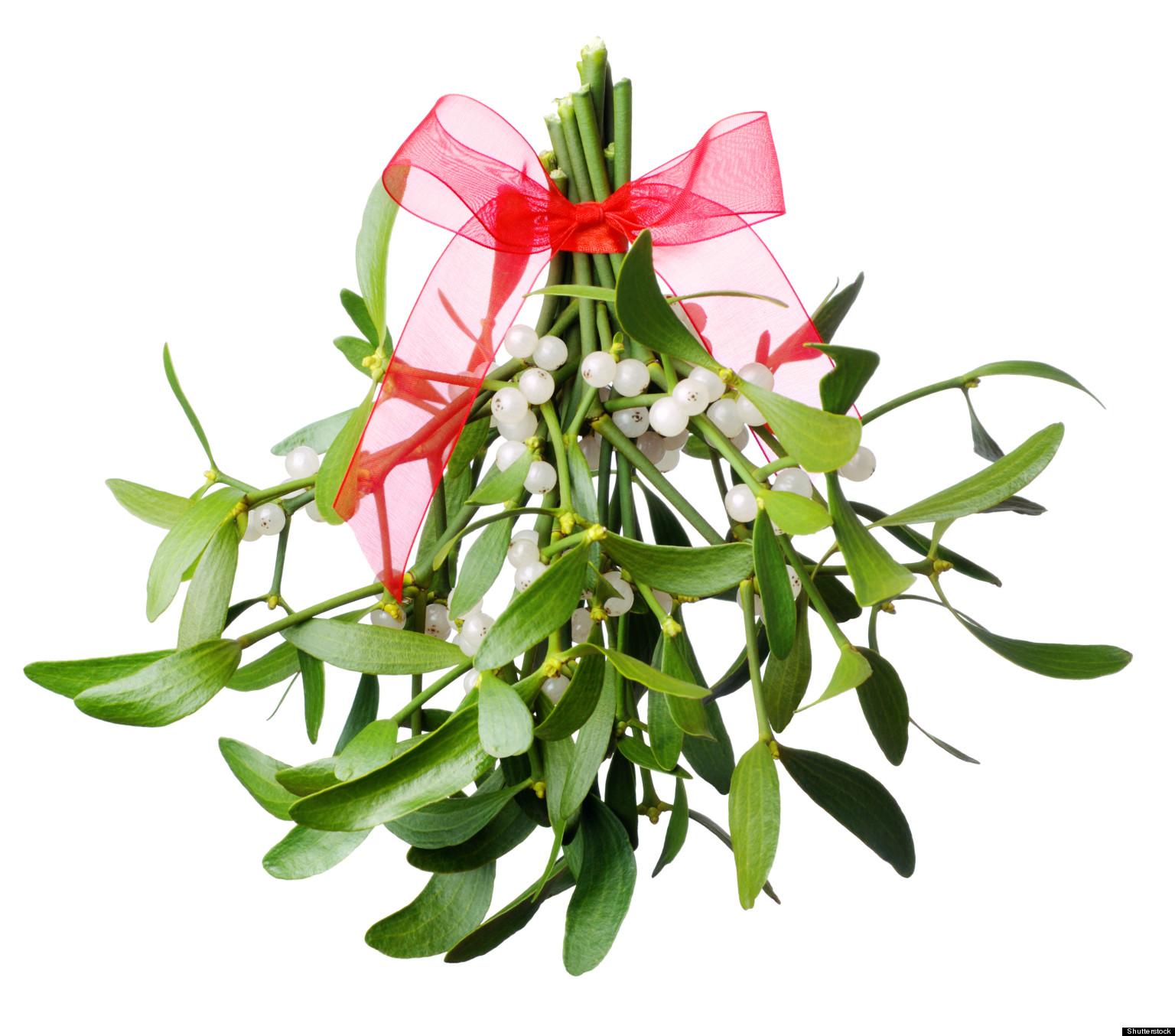 Image result for real mistletoe