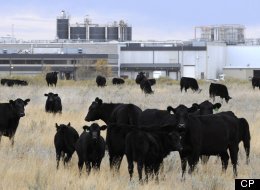 U.S. Management Gives Beleaguered Brooks Beef Plant New President