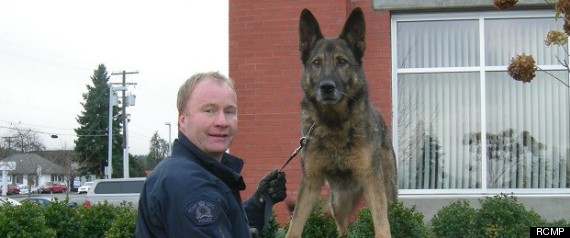 ROOK RCMP DOG