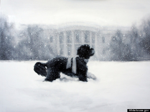 white house christmas card
