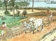 Creationist Congress: Broun, Akin & 'Early Earth' 6,000 Years Ago (VIDEO)