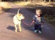 Dog Waits While Toddler Splashes In Puddle (VIDEO)