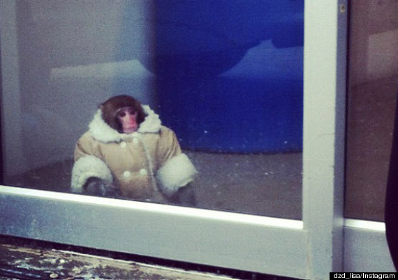 monkey ikea coat