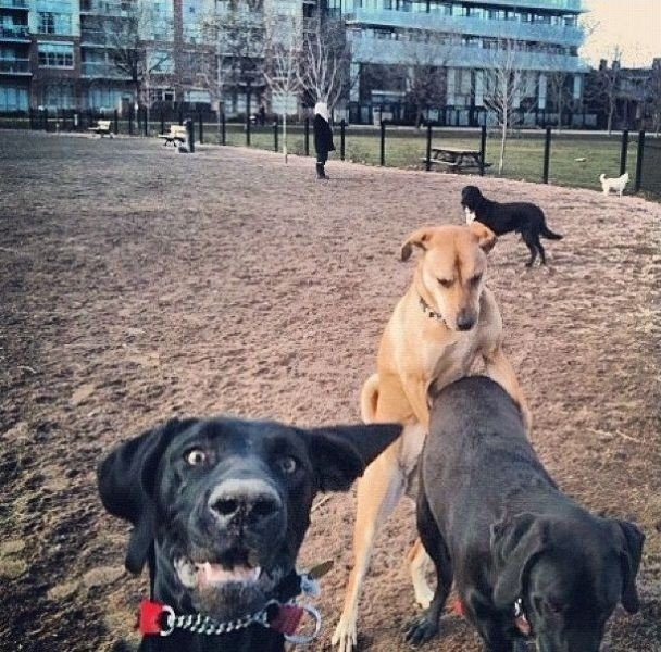 Dog Photobombs Dogs Humping Because Why Not (PHOTO)