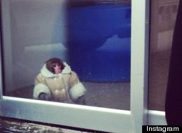 Ikea Monkey + Marc Jacobs = ?