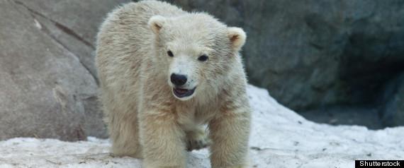 POLAR BEAR DEATHS TORONTO ZOO