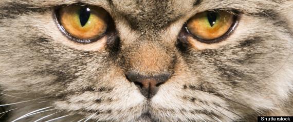 Milo Cat Burglar