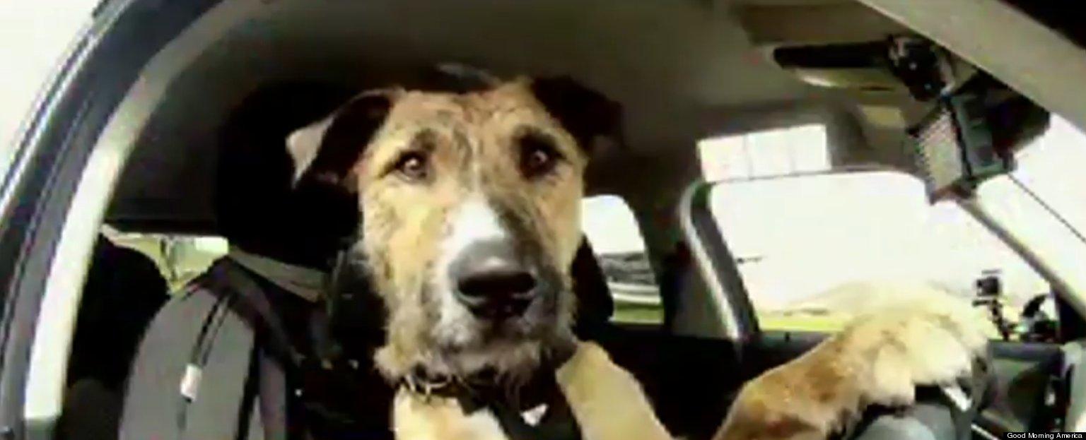 Divorce Dog Training