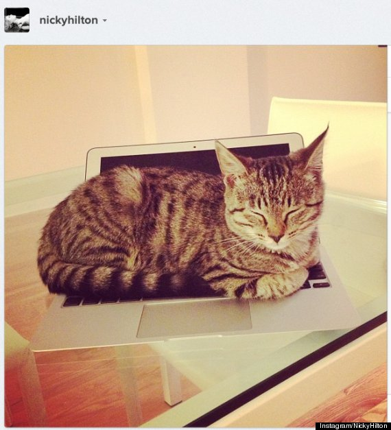 soho cat demi moore nicky hilton adopted