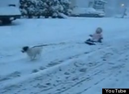 WATCH: Baby's First Dog Sled