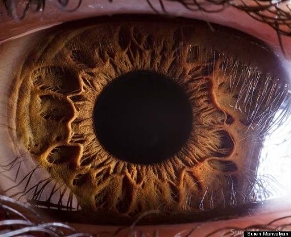 human eyes photographs