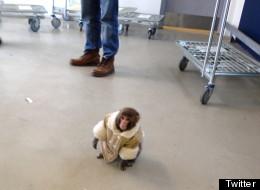 Ikea Monkey Strangled, Hit By Owners: Sanctuary